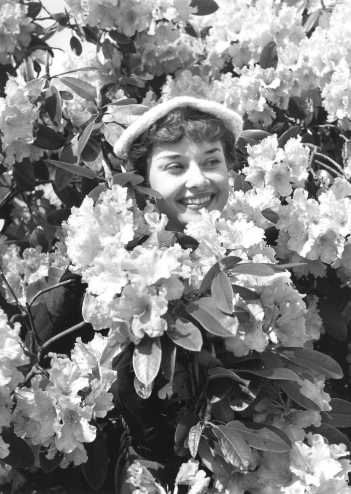 Mindfulness, 1st May 1950: US actress Audrey Hepburn (1929 - 1993) amidst spring blossoms. Original Publication: Picture Post - 5035 - We Take A Girl To Look For Spring - pub. 1950 (Photo by Bert Hardy/Picture Post/Hulton Archive/Getty Images)