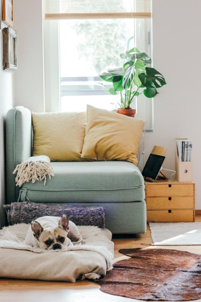 12 problemas de decoración: mascotas