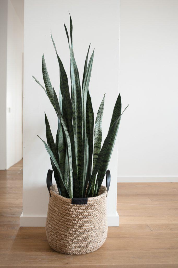 plantas para dormir mejor