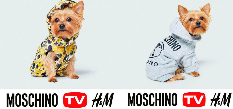 MoschinoxH&M