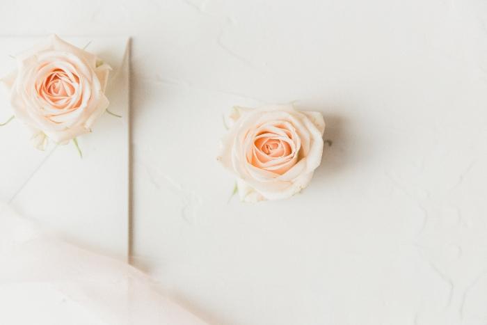 rosa, leo, perfumes-segun-signo-leo